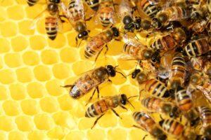 Bivax och honung för hälsa och skönhet